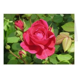 English Rose Tess of the D'Urbervilles Card