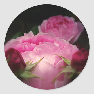 English Roses In Pink Classic Round Sticker
