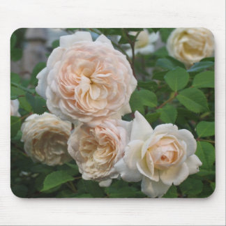 English Roses Mouse Pad