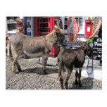 English Scenes, Donkeys in Clovelly, North Devon Post Cards