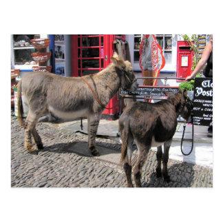 English Scenes, Donkeys in Clovelly, North Devon Postcard