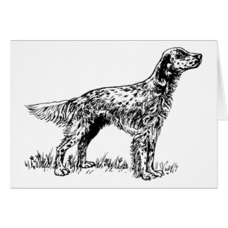 english setter greeting cards