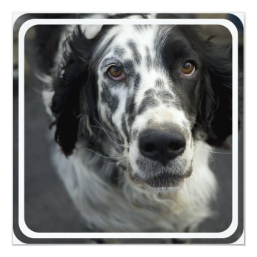 English Setter Dog Invitation