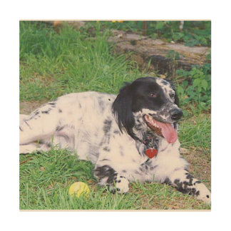 English Setter full laying Wood Wall Art
