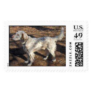 English Setter Stamp