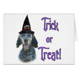 English Setter Trick Cards