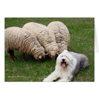 English Sheep Dog Card