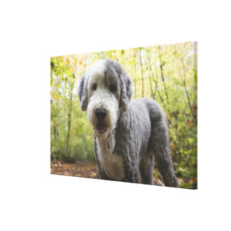English Sheepdog puppy in forest Canvas Print