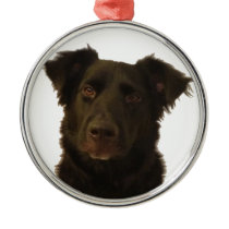 English Shepherd Ornament