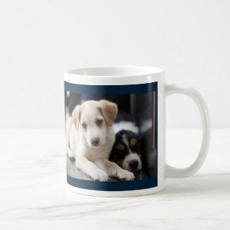 English Shepherd Puppy Granite Hills Animal Care L Coffee Mug