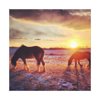 English Shires in a Bitter Cold Sunset Canvas Print