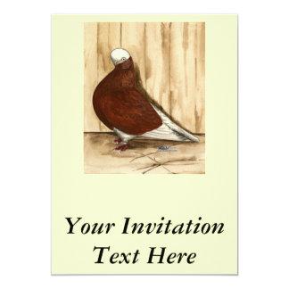 English Shortfaced Bald Pigeon Card