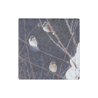English Sparrow Bird Family in Snowy Winter Storm Stone Magnet