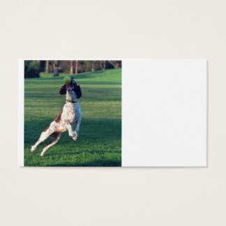 english springer catching ball.png business card