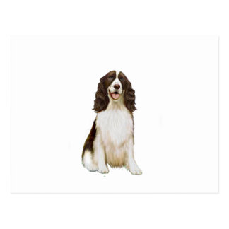 English Springer Spaniel (B) - Liver and White Postcard