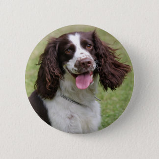 English Springer Spaniel dog beautiful photo, gift Button