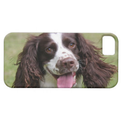 Case-Mate Vibe iPhone 5 Case with Springer Spaniel Phone Cases design