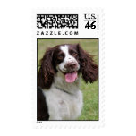 English Springer Spaniel dog beautiful photo Postage Stamps