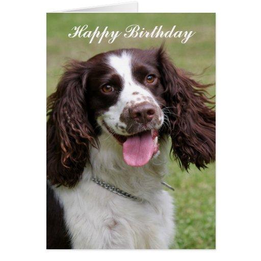 English Springer Spaniel dog happy birthday card – Happy Birthday Cards with Dogs