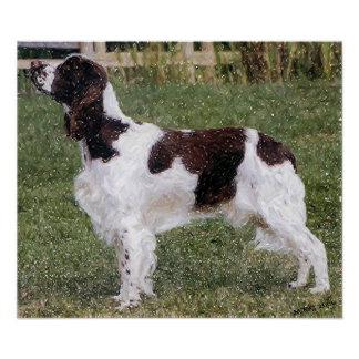 English Springer Spaniel Dog Portrait Poster Print