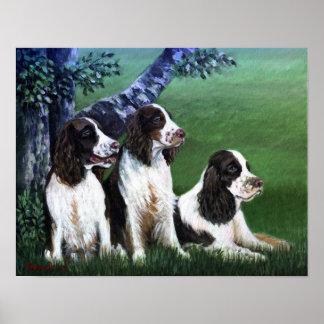 English Springer Spaniel Dog Poster Print