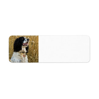 english springer spaniel in wheat.png label