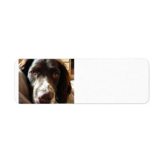english springer spaniel liver.png custom return address labels