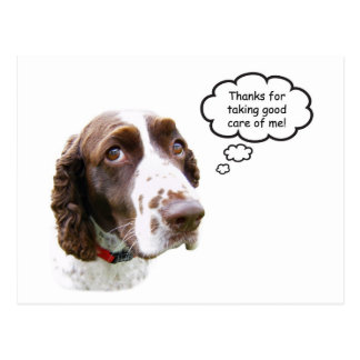 English Springer Spaniel Petsitter Postcard