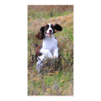 English Springer Spaniel Photo Greeting Card