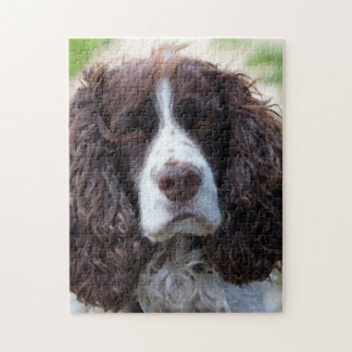 english springer spaniel.png jigsaw puzzle
