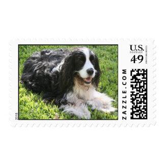 English Springer Spaniel Postage -- Med
