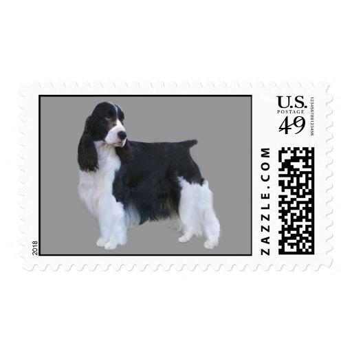 English Springer Spaniel Postage Stamp