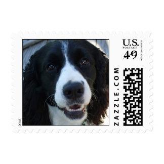 English Springer Spaniel Postage Stamps