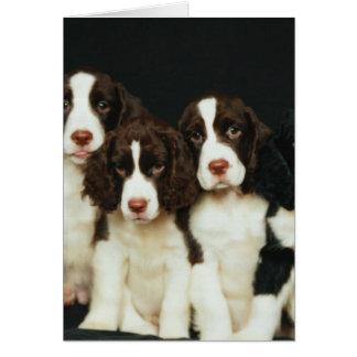 English Springer Spaniel Puppies (2) Card