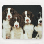 English Springer Spaniel Puppies (2) Mouse Pad