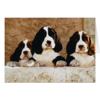 English Springer Spaniel Puppies Card
