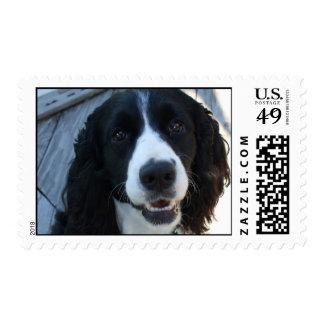 English Springer Spaniel Stamps
