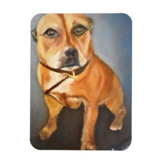 English Staffordshire Bull Terrier Photo Magnet