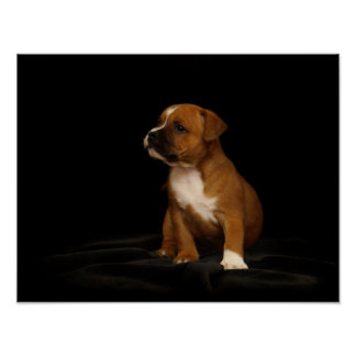 English Staffordshire Puppy Poster