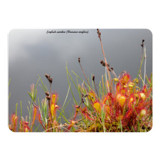 English Sundew Card