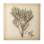 "English Thyme Herb Ceramic Tile<br><div class=""desc"">English Thyme Herb, aromatic leaves used to season meats, stews, poultry and vegetables. A classic ingredient of French herb blends, Bouquet garni and Herbes de Provence. More products with this design are available in this store&#39;s Herbs and Spices Category/ English Thyme. Just click my store link or icon and scroll...</div>"
