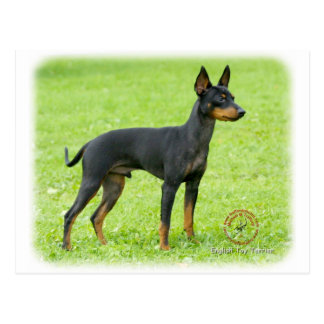 English Toy Terrier 9R095D-062 Postcard