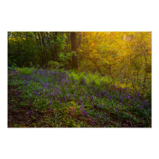 English Woodland Poster/Print Poster
