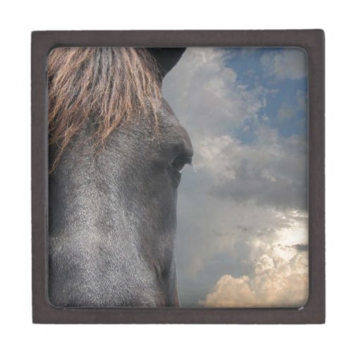 Engranaje de Horsehead Caja De Regalo De Calidad