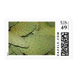Engranaje de la foto de la comida de la manía del sellos