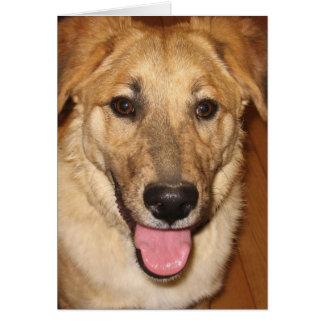 Enhorabuena canina del graduado del veterinario en tarjeta de felicitación