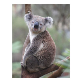 Enhorabuena de la selva del safari del oso de koal