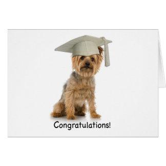 Enhorabuena de Yorkie de la graduación Tarjeta
