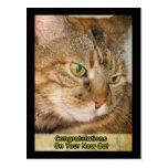 enhorabuena en su nuevo gato tarjeta postal