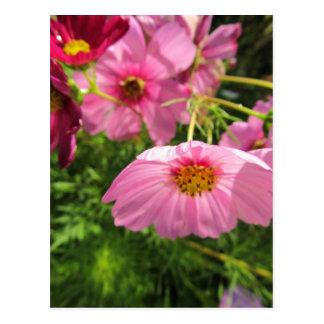 enjoy cheerful pink wildflowers postcard